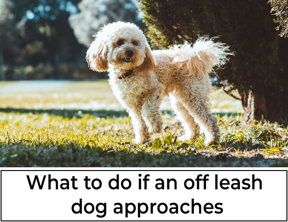 What to do if an off leash dog approaches