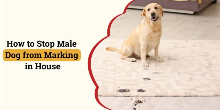 how-to-stop-male-dog-from-marking-in-house