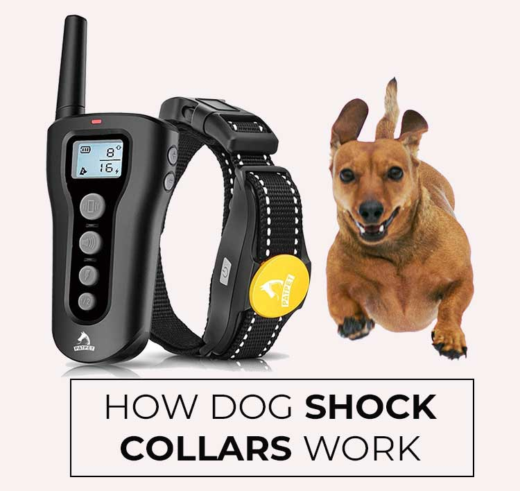 how-dog-shock-collars-work