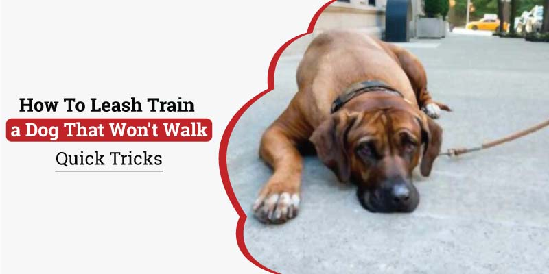 How-to-Leash-Train-a-dog-That-wont-walk