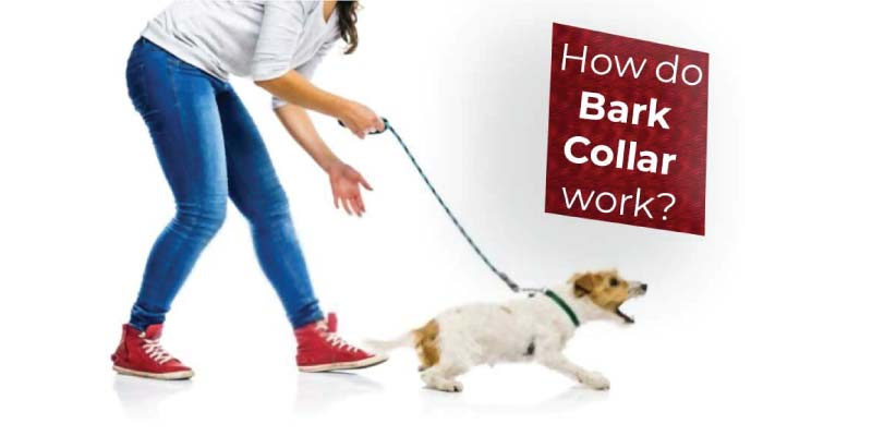 how-to-bark-collar-work