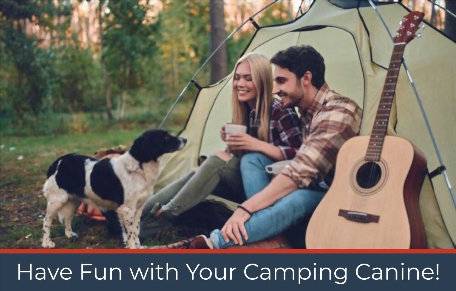Have Fun with Your Camping Canine