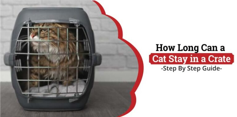 How-long-can-a-cat-stay-in-a-crate