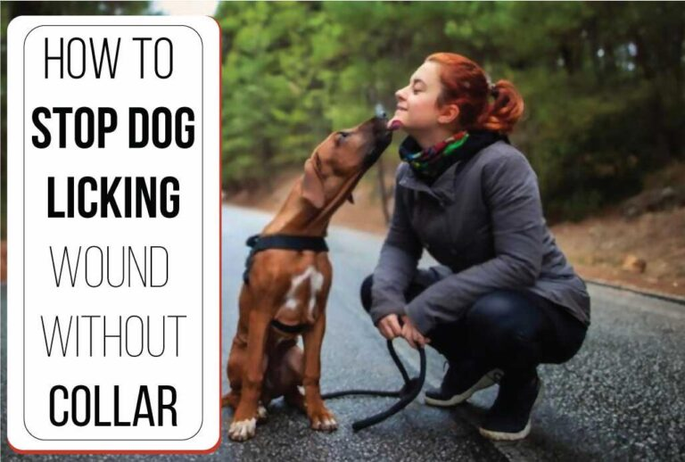 How to Stop Dog Licking Wound Without Collar