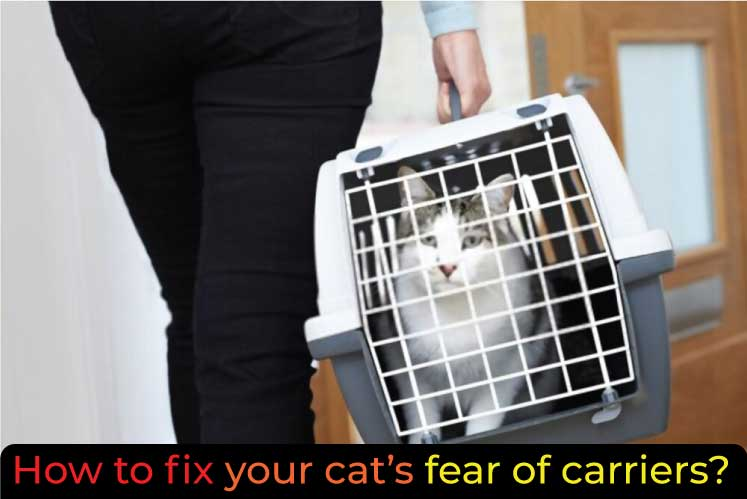 How-to-fix-your-cat--fear-of-carriers