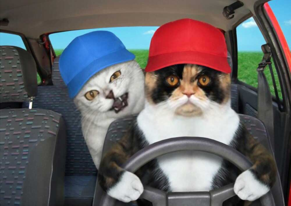 How to travel by roads with multiple cats​
