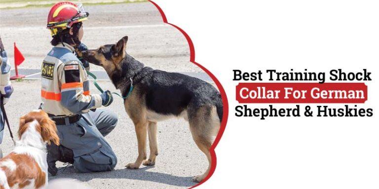 best-training-shock-collar-for-german-shepherd.jpg