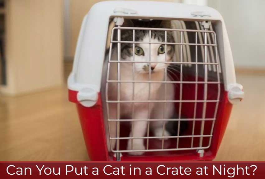can-you-put-a-cat-in-a-crate-at-night