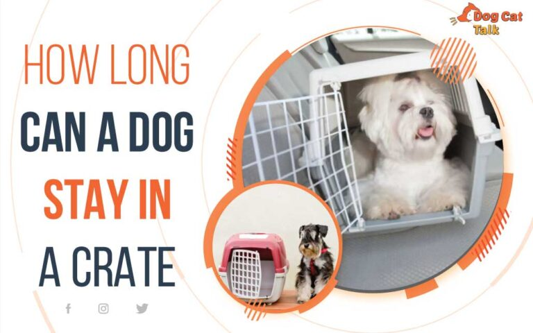 how-long-can-a-dog-stay-in-a-crate