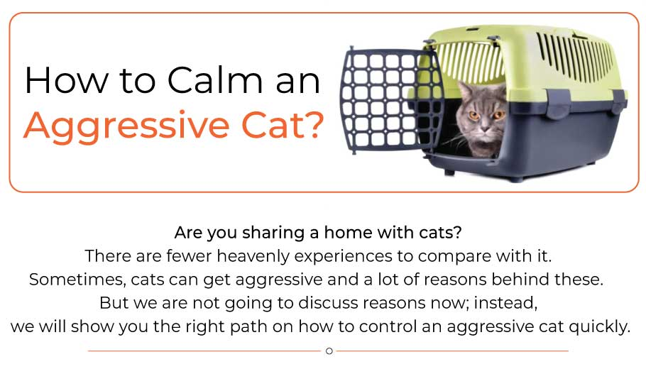 how-to-calm-an-aggressive-cat