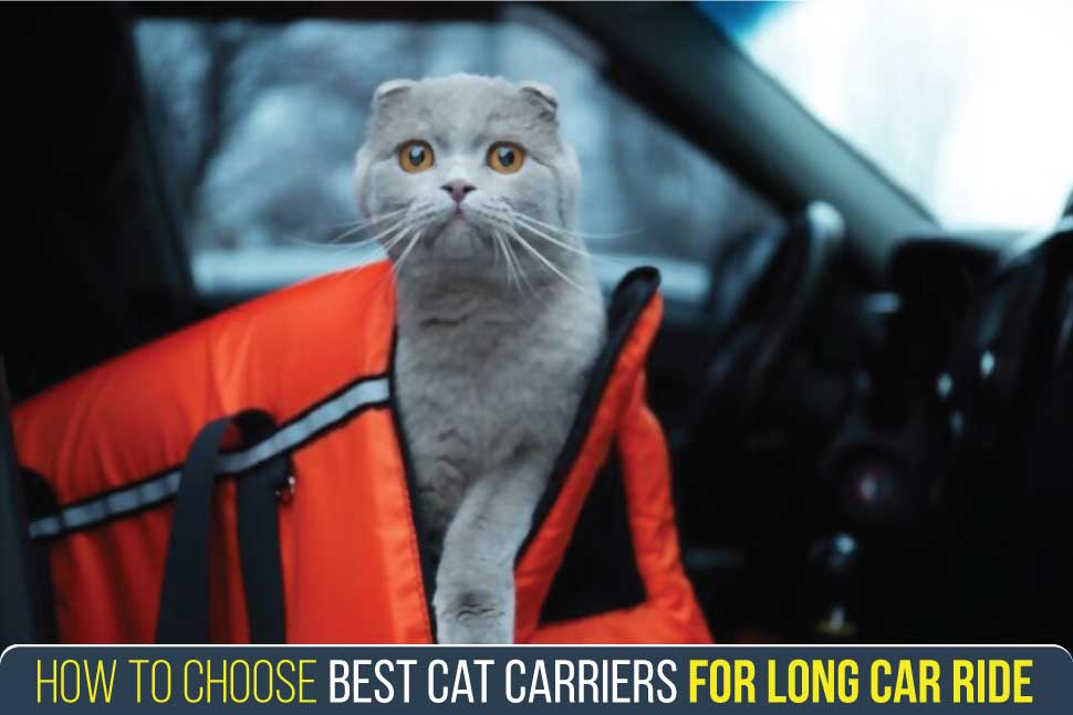 how-to-choose-best-cat-carriers-for-long-car-ride​