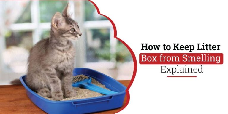 How-to-keep-litter-box-from-smelling.