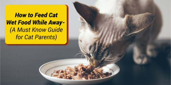 How Long Does It Take A Cat to Digest Food