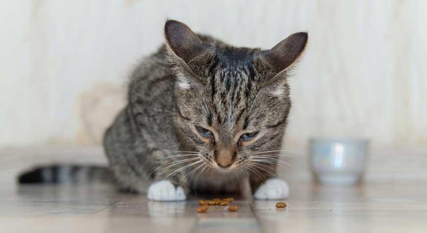 What happens If Your Cat Eats Aluminum Foil