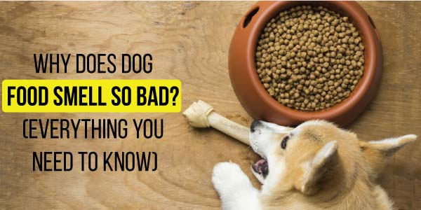 Why-Does-Dog-Food-Smell-So-Bad
