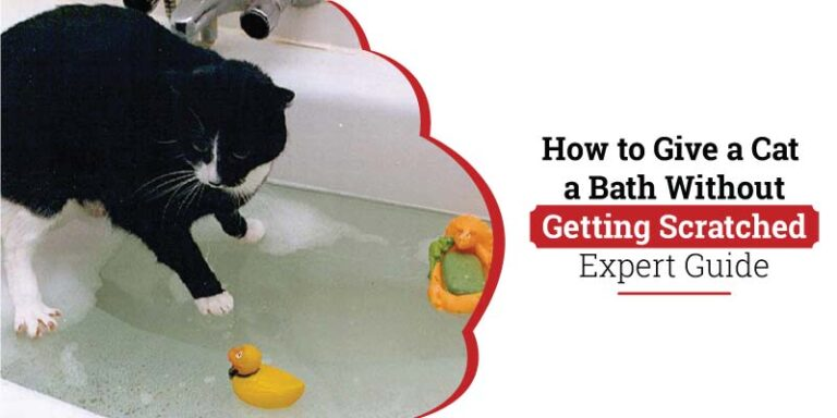 How-to-give-a-cat-bath-without-getting-scratched