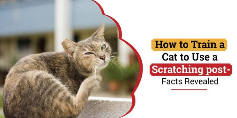 how-to-train-a-cat-to-use-a-scratching-post