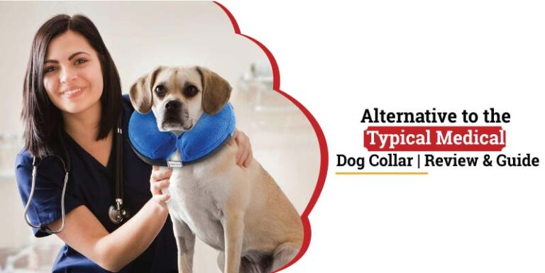 Alternative-to-the-typical-medical-dog-collar.jpg