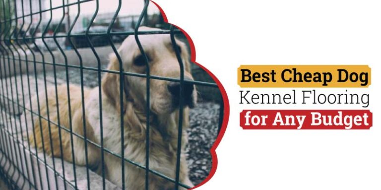 Best-Cheap-Kennel-flooring-for-Any-Budget.jpg