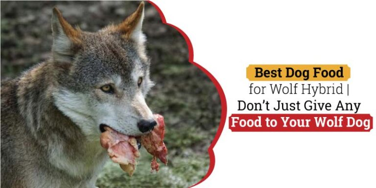 Best-Dog-Food-for-Wolf-Hybrid