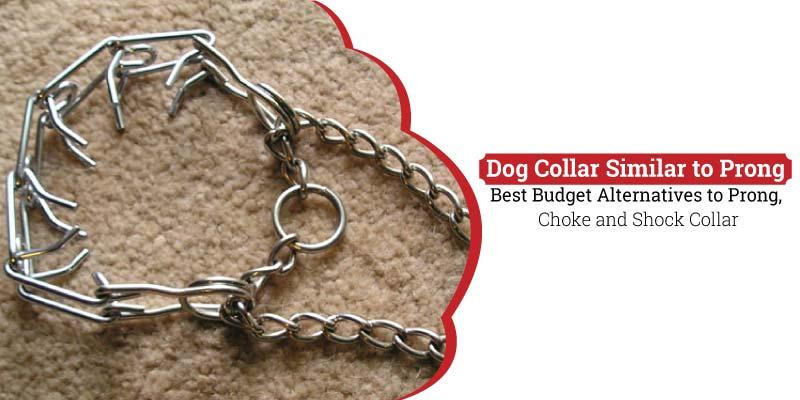 Dog-Collar-Similar-to-Prong