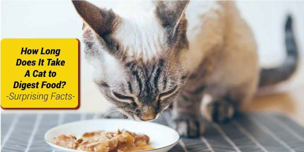 How-to-Feed-Cat-Wet-Food-While-Away-