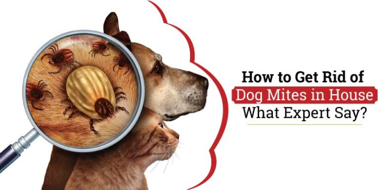 How-to-Get-Rid-of-Dog-Mites-in-House