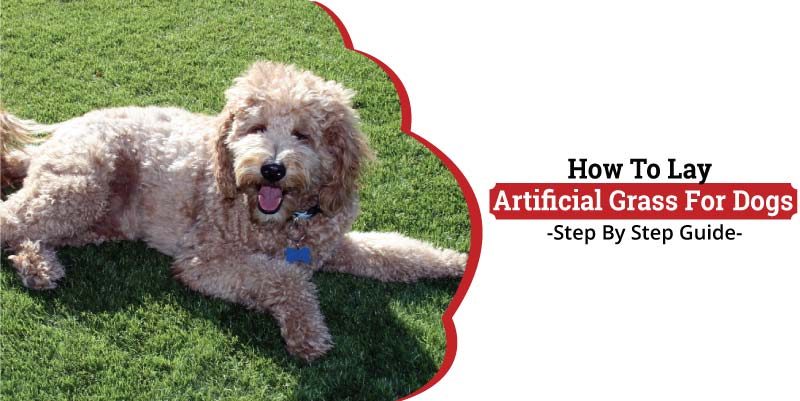 How To Lay Artificial Grass For Dogs