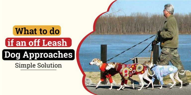 what-to-do-if-an-off-leash-dog-approaches