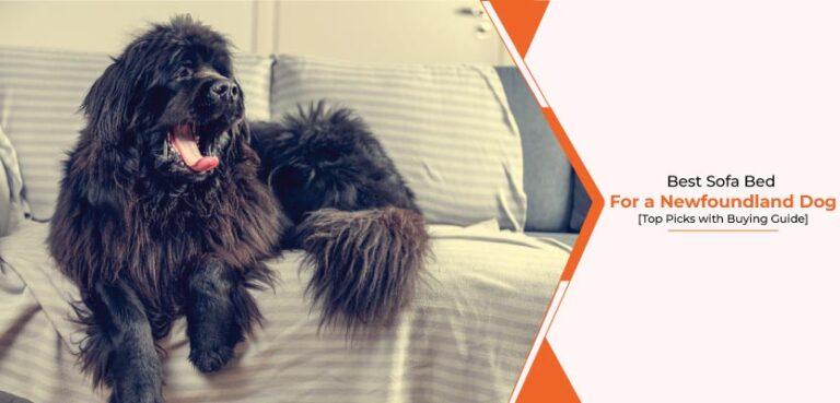 Best-sofa-bed-for-a-Newfoundland-dog