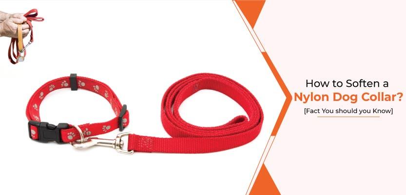 How-to-soften-a-Nylon-dog-collar.jpg
